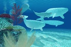 Beluga whales Stock Illustration