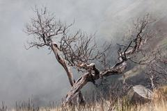 view of  the burned trees on the island of madeira - stock photo