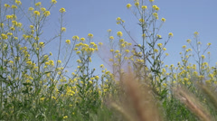 Steppe herbs Stock Footage