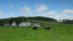 Driving past livestock grazing on small farm on back road Stock Footage
