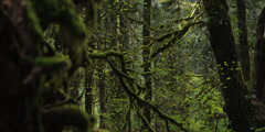 Red Epic - Inside Mt.Hood Oregon forest rack focus Stock Footage