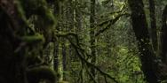Stock Video Footage of Red Epic - Inside Mt.Hood Oregon forest rack focus