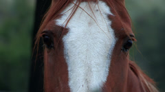 Horse looking close up Stock Footage