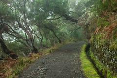 laurel forest on madeira - stock photo