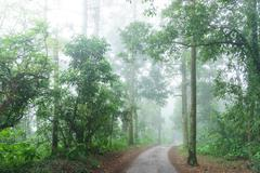Forest road with fog in the distance Stock Photos