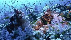 Stock Video Footage of beautiful coral reef full of fishes, Red Sea
