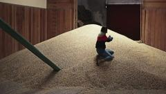 Playing in a mountain of grains Stock Footage