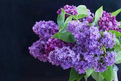 Bouquet of Lilac ob black Stock Photos