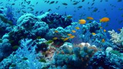 Stock Video Footage of static shot of coral reef full of fishes, red sea