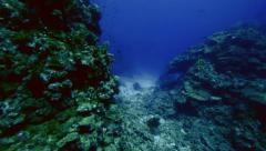 coral reef landscape in the Red Sea, panning shot - stock footage