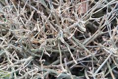 shrub branches without leaves - stock photo