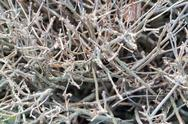 Stock Photo of shrub branches without leaves
