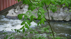 4K Trees By a Flowing Creek 4360 Stock Footage