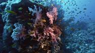 Stock Video Footage of Coral reef landscape