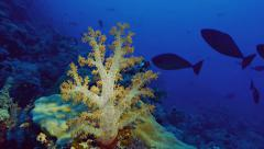 Soft coral at coral reef, red sea, light used Stock Footage