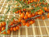 Stock Photo of Sea buckthorn