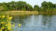 Stock Video Footage of Panorama of Lake, green trees and yellow flower with high voltage and blue sky