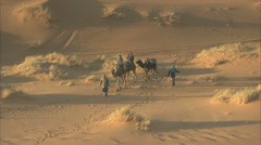 Camels trekking with tourists Stock Footage