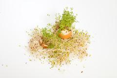 fresh alfalfa sprouts and spring easter egg - stock photo