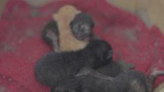 Week old kitten litter Stock Footage