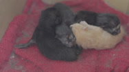 Stock Video Footage of Week old kitten litter