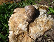 Snail on the stone Stock Photos
