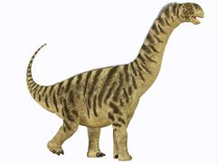 camarasaurus juvenile - stock illustration