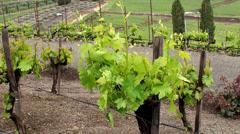 Vineyards of California, USA. Stock Footage
