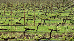 Vineyards in the Sonoma Valley. California, USA. Stock Footage