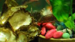 closeup of Aquarium - stock footage