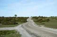 Winding gravel road through a landscape with lots of junipers Stock Photos