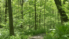 4K Walking on a Path in the Woods 4375 - stock footage