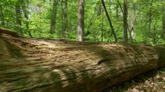 4K Fallen Tree in the Forest 4373 Stock Footage