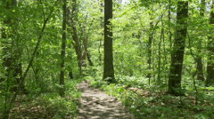 Walking on a Pennsylvania Trail in the Woods Steadicam Stock Footage