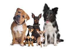 Group of five dogs Stock Photos
