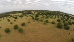 Balearic Nature of Trees and Fields - Aerial Flight, Mallorca Stock Footage