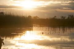 Okavango delta in botswana - stock photo