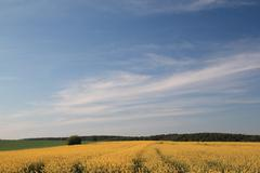 Rural spring landscape Stock Photos