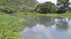 Tropical caribbean gungle river  Stock Footage