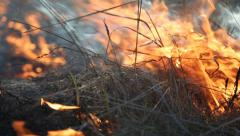 Burning dry grass in the steppe Stock Footage