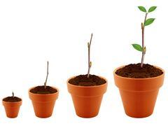 Growing concept Stock Photos