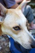 Attentive Dog attitude attitude - stock photo