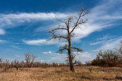 leafless tree on meadow - stock photo