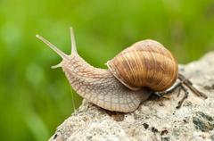 Land snail Stock Photos