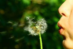 Dandelion wish Stock Photos
