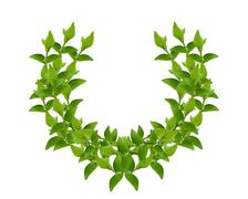 Wreath from Green leaves Stock Photos