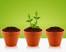 growing concept - stock photo