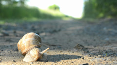 Timelapse - snail crawls on the road (in nature) Stock Footage