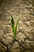There is hope. small plant on the cracked dry land. drought photo collection. Stock Photos