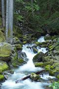 Rocky mountain creek in vertical photography. cascades mountains, washington Stock Photos